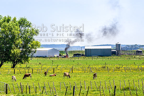 Plastic wrapping from silage storage being burned on a dairy farm creating thick black smoke. A practice used by some farmers to dispose of plastic, instead of recycling, Horowhenua District, Manawatu-Wanganui Region, New Zealand (NZ) stock photo.