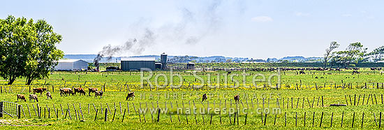 Plastic wrapping from silage storage being burned on a dairy farm creating thick black smoke. A practice used by some farmers to dispose of plastic, instead of recycling. Panorama, Horowhenua District, Manawatu-Wanganui Region, New Zealand (NZ) stock photo.