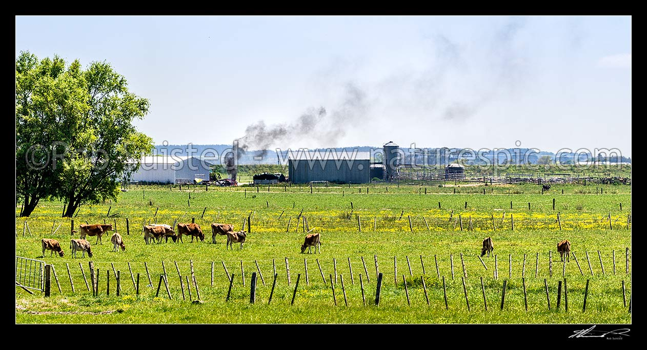 Image of Plastic wrapping from silage storage being burned on a dairy farm creating thick black smoke. A practice used by some farmers to dispose of plastic, instead of recycling. Panorama, Horowhenua District, Manawatu-Wanganui Region, New Zealand (NZ) stock photo image