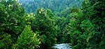 Te Urewera River and forest