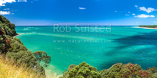Tauranga Harbour at Katikati entrance from Papatu Point Pa site and Bowentown Heads. Matakana Island right. Flowering pohutukawa tree forest (Metrosideros excelsa). Panorama, Bowentown, Waihi Beach, Western Bay of Plenty District, Bay of Plenty Region, New Zealand (NZ) stock photo.