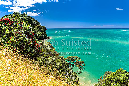 Tauranga Harbour at Katikati entrance from Papatu Point Pa site and Bowentown Heads. Flowering pohutukawa tree forest (Metrosideros excelsa), Bowentown, Waihi Beach, Western Bay of Plenty District, Bay of Plenty Region, New Zealand (NZ) stock photo.