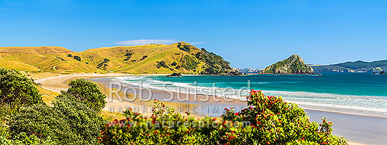 Opito Bay Beach and Tamaihu headland and Tokarahu Point, with flowering pohutukawa trees (Metrosideros excelsa) and golden sand of summer. Panorama, Opito Bay, Coromandel Peninsula, Thames-Coromandel District, Waikato Region, New Zealand (NZ) stock photo.