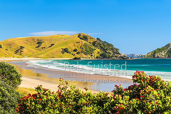 Opito Bay Beach and Tamaihu headland and Tokarahu Point, with flowering pohutukawa trees (Metrosideros excelsa) and golden sand of summer, Opito Bay, Coromandel Peninsula, Thames-Coromandel District, Waikato Region, New Zealand (NZ) stock photo.