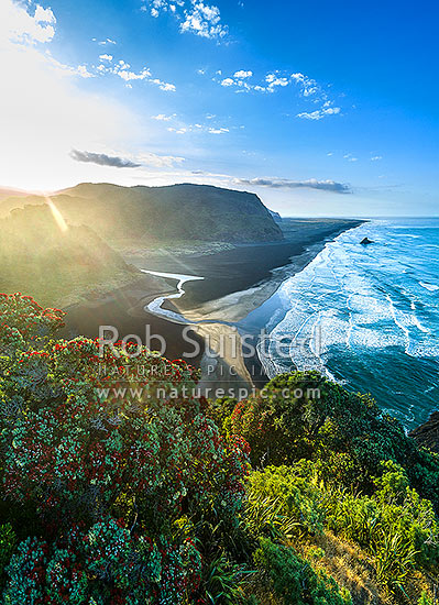 Karekare Beach at sunrise, with flowering pohutukawa trees in foreground. Looking past Karekare Stream to Panatahi Island, towards Whatipu. Moody aerial view, Karekare Beach, Waitakere City District, Auckland Region, New Zealand (NZ) stock photo.