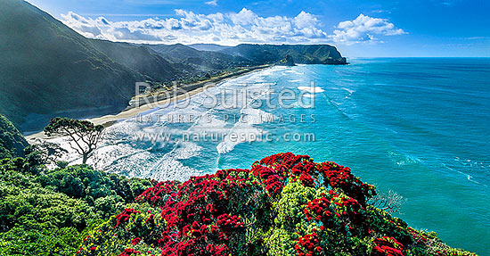 North Piha Beach, and Kohunui Bay, seen from Te Waha Point. Lion Rock and Kaiwhare Point distant. Waitakere Ranges, West Auckland, with flowering Pohutukawa trees, Piha Beach, Waitakere City District, Auckland Region, New Zealand (NZ) stock photo.