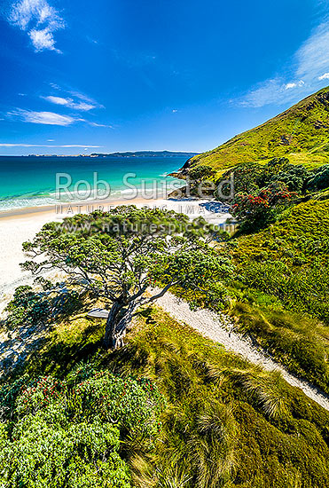Otama Beach and Otama Bay, with flowering Pohutukawa trees lining the foreshore. Mercury Islands behind. Aerial view, Otama Beach, Coromandel Peninsula, Thames-Coromandel District, Waikato Region, New Zealand (NZ) stock photo.
