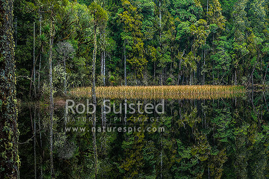 Waihora Lagoon nestled amongst old podocarp forest reflecting perfectly in still water of the lake, Pureora Forest Park, Waitomo District, Waikato Region, New Zealand (NZ) stock photo.