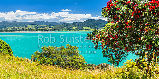 Tauranga Harbour near Katikati, withpohutukawa tree (Metrosideros excelsa) flowering in Anzac Bay, Papatu Point. Kaimai Range behind. panorama, Bowentown, Waihi Beach, Western Bay of Plenty District, Bay of Plenty Region, New Zealand (NZ) stock photo.