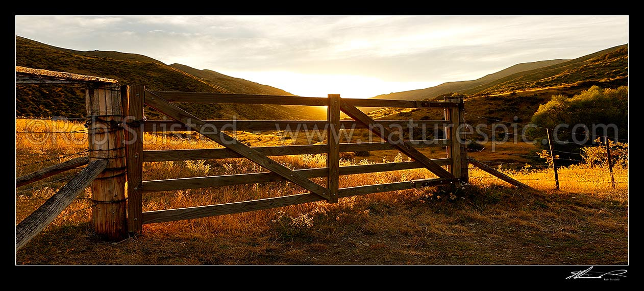 Image of Golden gate, farm gate at sunset in dry Marlborough high country farmland, Molesworth Station, Marlborough District, Marlborough Region, New Zealand (NZ) stock photo image