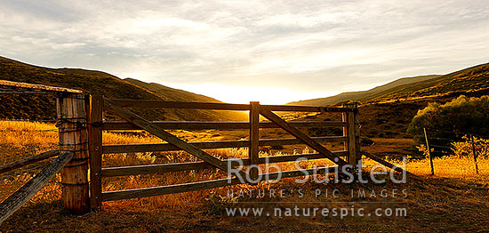 Golden gate, farm gate at sunset in dry Marlborough high country farmland, Molesworth Station, Marlborough District, Marlborough Region, New Zealand (NZ) stock photo.