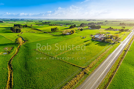Lush farmland and dairy farming pasture on the Himatangi Plains, Sanson, Manawatu District, Manawatu-Wanganui Region, New Zealand (NZ) stock photo.