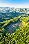 Forestry logging operations