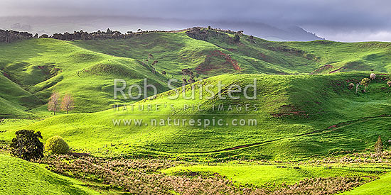 Waikato farmland panorama near Raglan. Lush spring grass, wetland areas and native forest visible, Raglan, Waikato District, Waikato Region, New Zealand (NZ) stock photo.