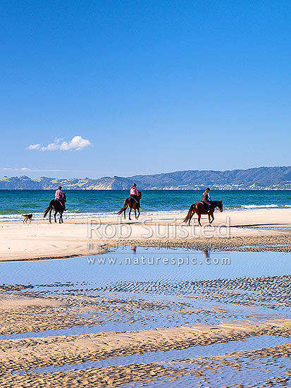 Horse riders on Ruakaka Beach. Looking south east towards Bream Head, Waipu Cove and Langs Beach, across Bream Bay, Ruakaka, Whangarei District, Northland Region, New Zealand (NZ) stock photo.