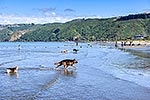 Petone Beach dog area, Wellington