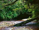 Wilderness River, Karamea