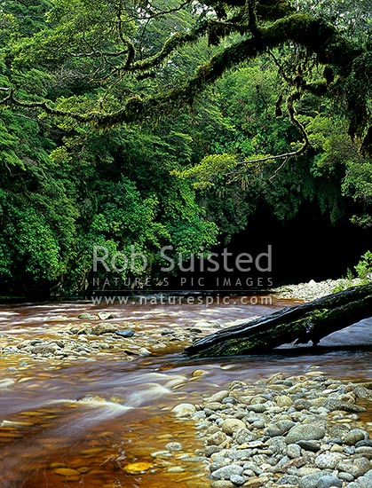 The Oparara River emerging from the little Oparara arch (Moria Gate), Karamea, Kahurangi National Park, Buller District, West Coast Region, New Zealand (NZ) stock photo.