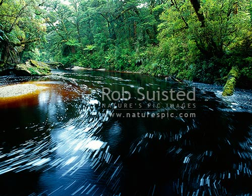 The dark tannin stained Oparara River as it slowly winds through beech forest, Karamea, Kahurangi National Park, Buller District, West Coast Region, New Zealand (NZ) stock photo.