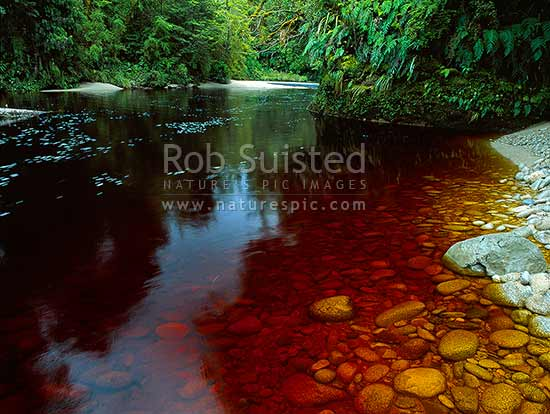 The dark tannin stained Oparara River passing thru a small sandy rainforest gorge, Karamea, Kahurangi National Park, Buller District, West Coast Region, New Zealand (NZ) stock photo.