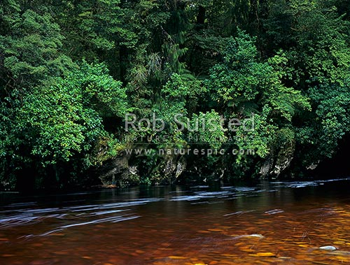 The dark tannin stained Oparara River passing a mix of beech, podocarp & broadleaf forest, Kahurangi National Park, Buller District, West Coast Region, New Zealand (NZ) stock photo.