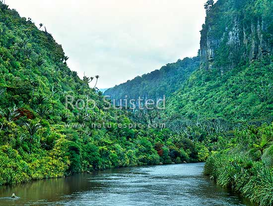 Pororari River and bluffs, Paparoa National Park, Buller District, West Coast Region, New Zealand (NZ) stock photo.