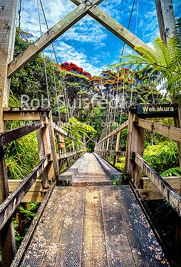 Swingbridge over Wekakura Creek on the Heaphy Track, Kahurangi National Park, Buller District, West Coast Region, New Zealand (NZ) stock photo.