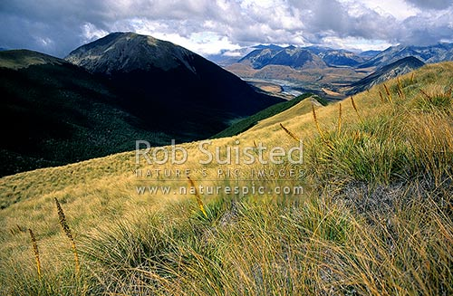 Mount (Mt) Binser (1859m) from the head of Lower Farm Stream. Spaniard Grass (Aciphylla sp.), Arthur's Pass National Park, Selwyn District, Canterbury Region, New Zealand (NZ) stock photo.