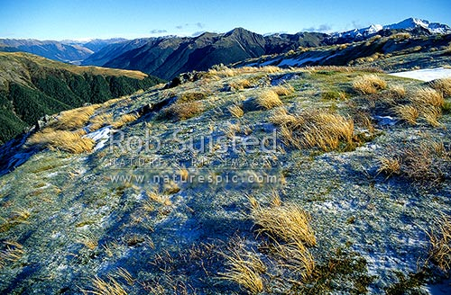 Late evening sun raking across Travers Peak and looking across the Lewis Valley, Lewis Pass, Hurunui District, Canterbury Region, New Zealand (NZ) stock photo.