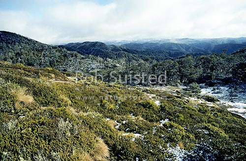 Te Pukeohikarua (1506m) in central Kawekas, looking NW, after snow fall, Kaweka Forest Park, Hastings District, Hawke's Bay Region, New Zealand (NZ) stock photo.