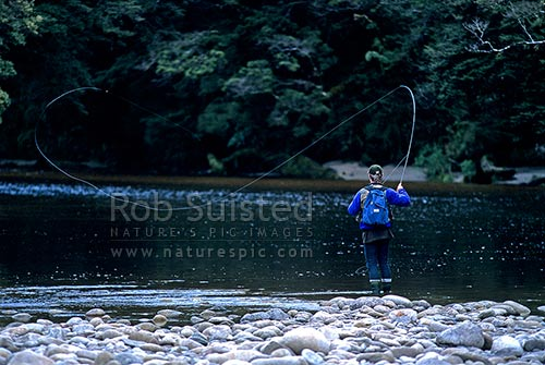 Trout fisherman casting trout fly across river, Karamea, Buller District, West Coast Region, New Zealand (NZ).