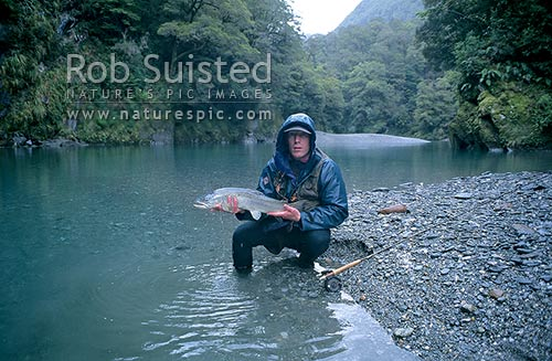 5 1/2lb brown trout in Tomtit Grotto, South Westland, Westland District, West Coast Region, New Zealand (NZ) stock photo.