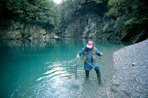 Landing a 5 1/2lb brown trout in 'Tomtit grotto' - (model released), Mount Aspiring National Park, Westland District, West Coast Region, New Zealand (NZ) stock photo.