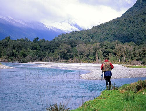 Fly fishing in the Jackson River, South Westland, South Westland, Westland District, West Coast Region, New Zealand (NZ) stock photo.