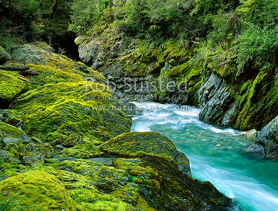 Fish River Gorge. Makarora River catchment, West Otago, Haast Pass, Mount Aspiring National Park, Queenstown Lakes District, Otago Region, New Zealand (NZ) stock photo.