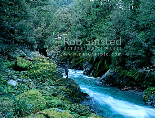 Tramping in the Fish River Gorge. Makarora River catchment, West Otago, Haast Pass, Mount Aspiring National Park, Queenstown Lakes District, Otago Region, New Zealand (NZ) stock photo.