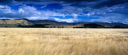 Rural farmland panorama across dry grassland towards Waihopai Valley and ranges, Marlborough, Marlborough District, Marlborough Region, New Zealand (NZ) stock photo.