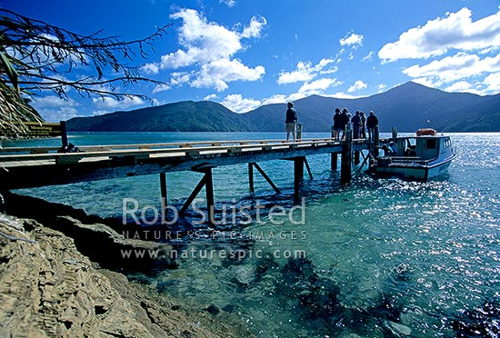 Visiting Motuara Is Reserve with Dolphin Watch Marlborough, Marlborough Sounds, Marlborough District, Marlborough Region, New Zealand (NZ) stock photo.