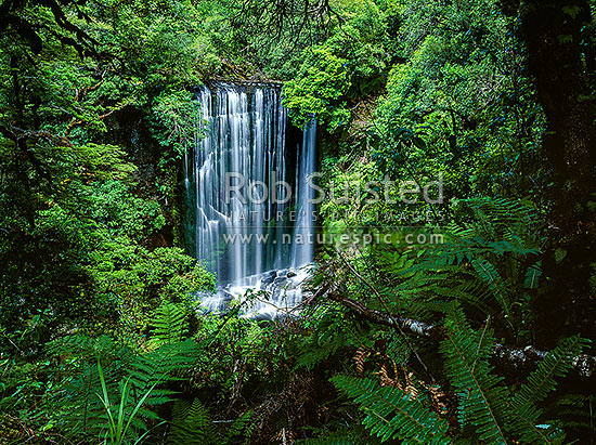 Korokoro Falls (22metres) on Te korokoroowhaitiri Stream, Lake Waikaremoana great walk track, Te Urewera National Park, Wairoa District, Hawke's Bay Region, New Zealand (NZ) stock photo.