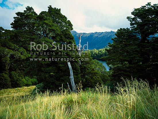 Lake Dan (930m) nestled in forest of the Thomson Range, above Thomson Creek and the Arawhata River, South Westland, Westland District, West Coast Region, New Zealand (NZ) stock photo.
